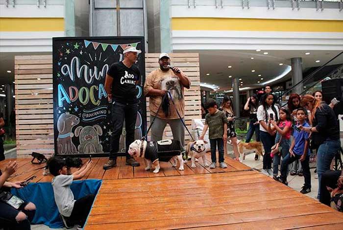 camilo ibrahim issa - Camilo Ibrahim Issa: Sambil Maracaibo tuvo un día entre perros y mandalas